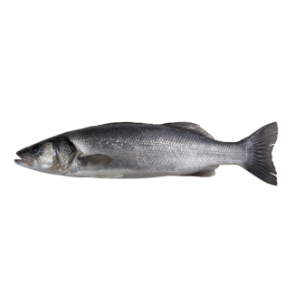 Fresh, Farmed, Whole Seabass 1X400-600gm